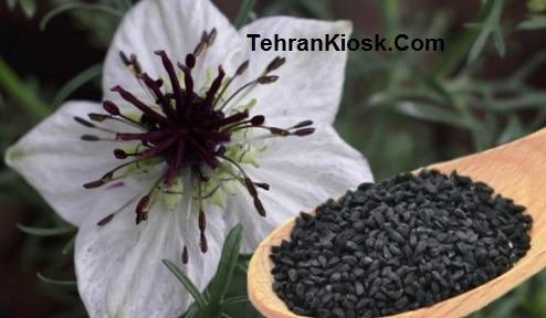 خواص و فواید سیاه دانه برای بدن + عوارض و مضرات احتمالی سیاه دانه
