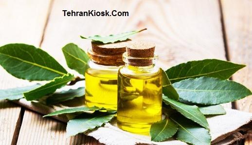 خواص و فواید برگ بو در طب سنتی + مزایای دارویی و درمانی برگ بو