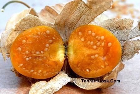 خواص و فواید میوه فیسالیس در طب سنتی + مزایای دارویی و درمانی آن