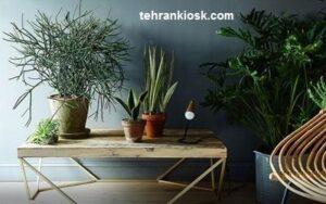 معرفی گیاهان نشاط آور که باعث انرژی مثبت میشوند