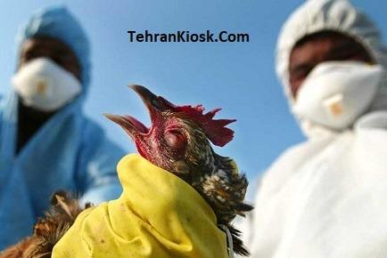 با صدور اطلاعیهای اعلام شد: مشاهده بیماری آنفلوآنزای فوق حاد پرندگان در تبریز