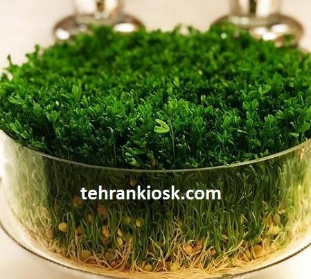 آموزشی برای کاشت سبزه عید زیبا و پر پشت با روش های مختلف