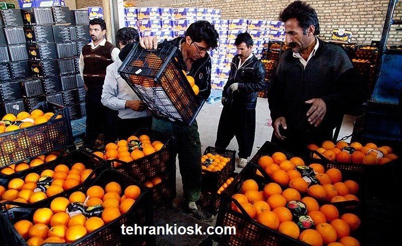 نابودی حدود 30 هزار تن پرتقال و قرار گرفتن در آستانه فاسد شدن