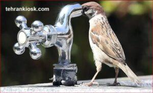 نوشیدن روزانه ۲ لیتر آب برای درمان بیماری کرونا توسط پزشکان توصیه میشود