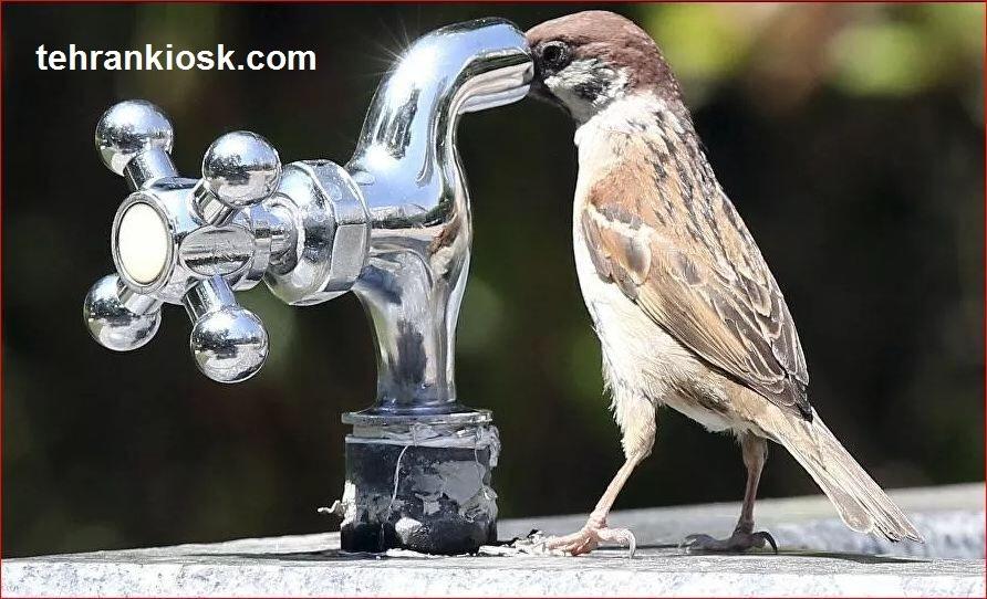 نوشیدن روزانه 2 لیتر آب برای درمان بیماری کرونا توسط پزشکان توصیه میشود